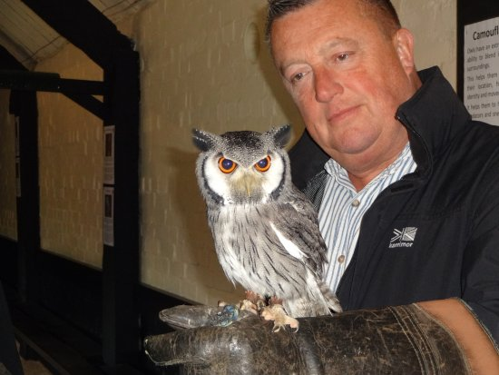 Cullompton, UK: Tig the owl