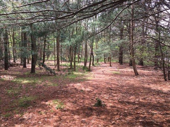 Eatontown, Nueva Jersey: Park after a storm