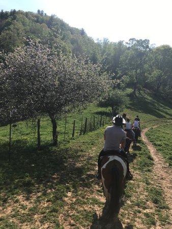 Smoky Mountain Trail Rides and Bison Farm: photo4.jpg