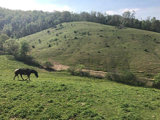 Smoky Mountain Trail Rides and Bison Farm: photo5.jpg