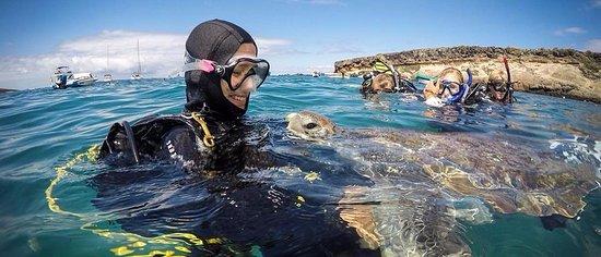 Las Americas Divers