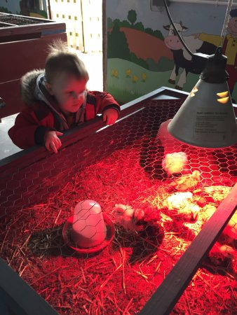 Etwall, UK: Seeing the chicks