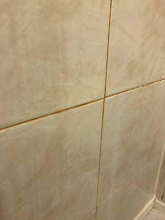 Bathroom not very clean needs a good clean with bleach