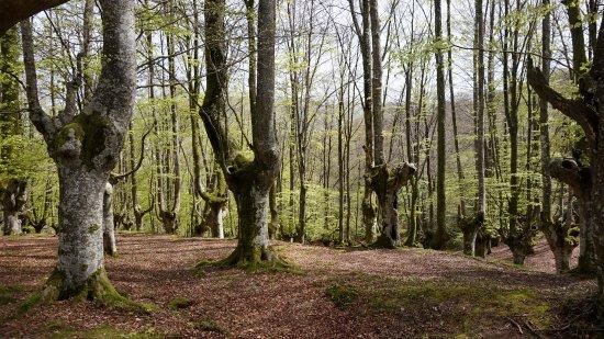 Baskisch, Spanje: Bosque en el parque natural de Urkiola