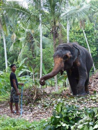 Kegalle, Sri Lanka: visite des autres éléphants