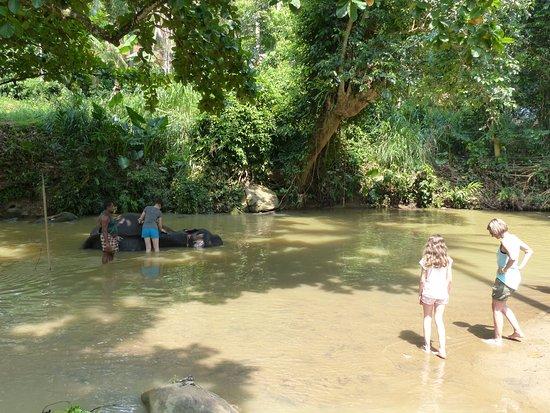 Kegalle, Sri Lanka: le bain