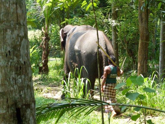 Kegalle, Sri Lanka: marche avec l'elephant