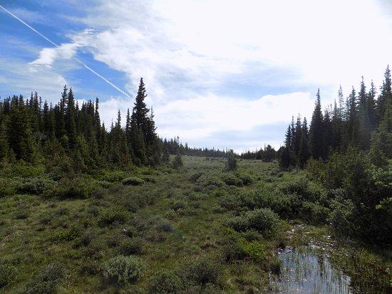 Rollinsville, โคโลราโด: A moose-inhabited wetland near Brainard Lake