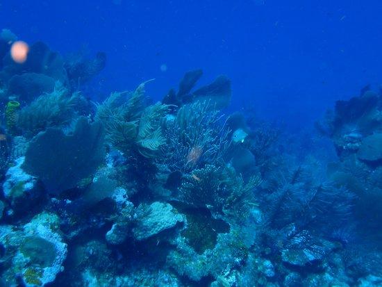 Sea Sports Belize : It's truly beautiful in Belize!