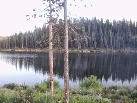 Walden, CO: Lodgepole pines on the shore of Michigan Reservoir