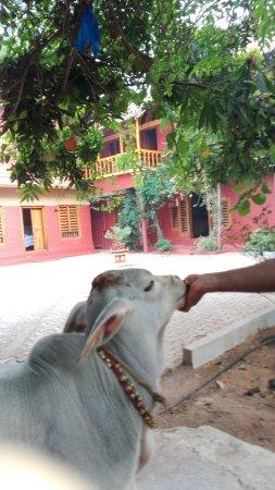 Ayurveda Yoga Villa: IMG_20170404_074545_large.jpg