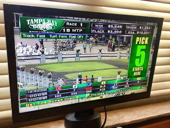 Tampa Bay Downs: photo5.jpg