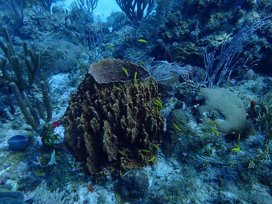 Bolongo Bay, St. Thomas: A barrel sponge.