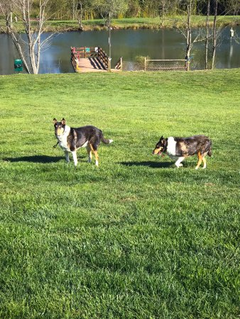 Barkwells, The Dog Lovers' Vacation Retreat : Taking a walk around the pond