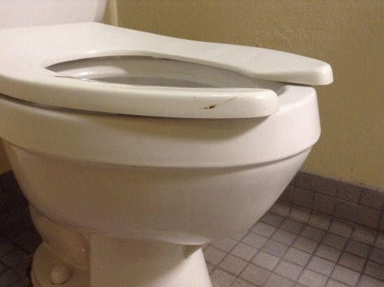 Travel Inn Motel: Feces on the toilet. Would you sit on that??