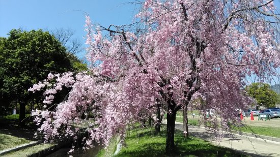 Central Park (Chuo Koen)