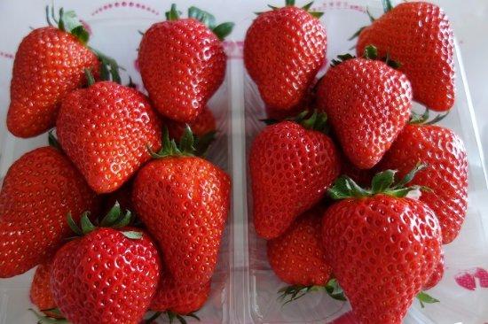 Yachiyo, اليابان: 大きく甘いイチゴです