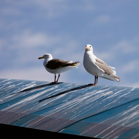 Seldovia, AK: Seagulls on the roof of the ramp in the boat harbor