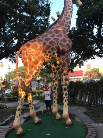 Jungle Golf My Little Guy And I Had A Great Time