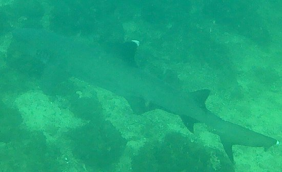 BA Divers: IMG-20170429-WA0003_large.jpg