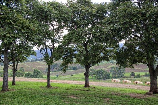 Kangarrific Tours: Mountain View winery - stunning!