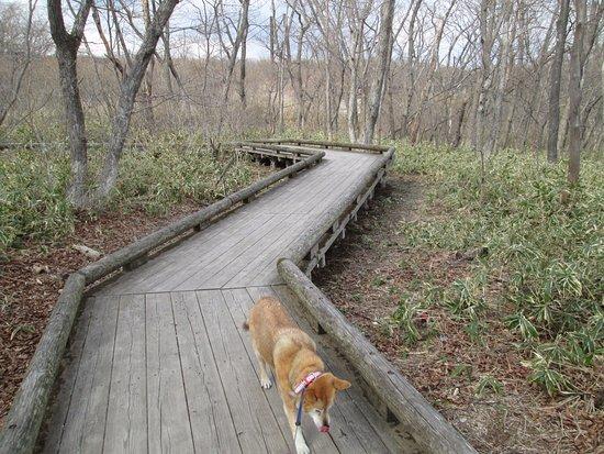 Nasu-gun, Japão: 木道と犬