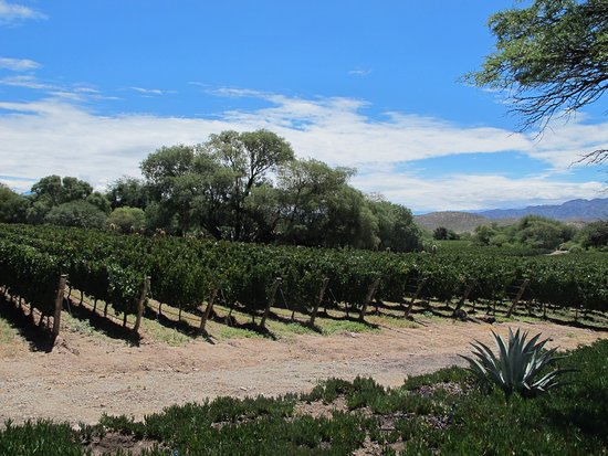 colome singles Bodega colome, molinos: see 141 reviews, articles, and 152 photos of bodega colome, ranked no2 on tripadvisor among 5 attractions in molinos.