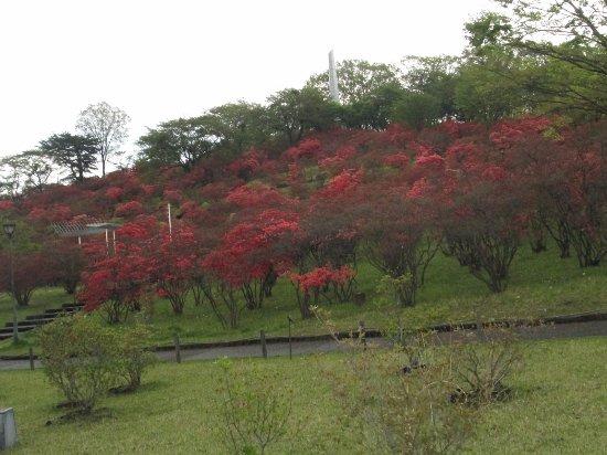 Yaita, Japan: ツツジとタワー