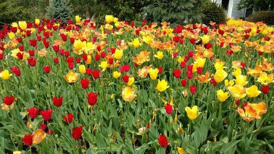 Morristown, NJ: Gardens during April