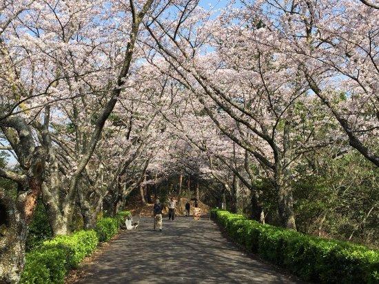 Kinbuchi Forest Park
