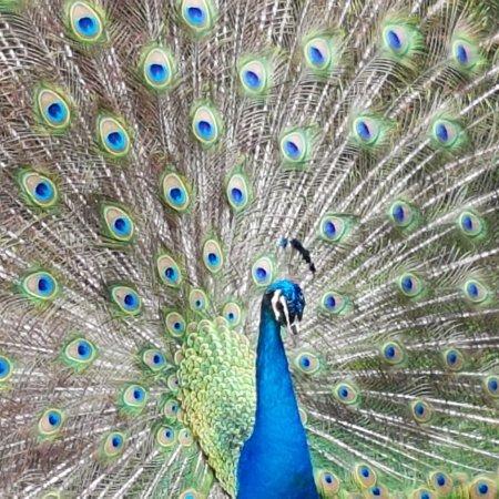 Zoologico de Cali: IMG_20170411_155235_542_large.jpg