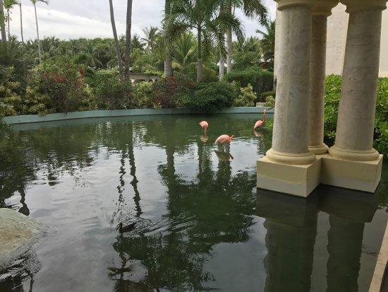 Iberostar Grand Hotel Bavaro: photo0.jpg