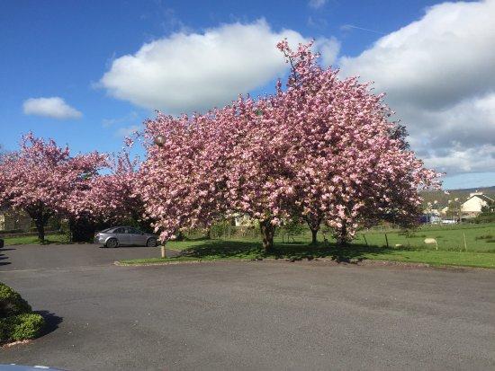 Langho, UK: Blossom in full bloom outside hotel