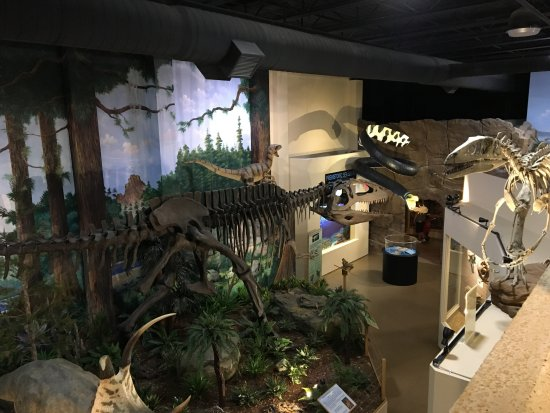 The Dinosaur Other Side Of Museum As Seen From Third