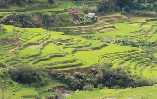 Banaue, Philippines: the green scenery