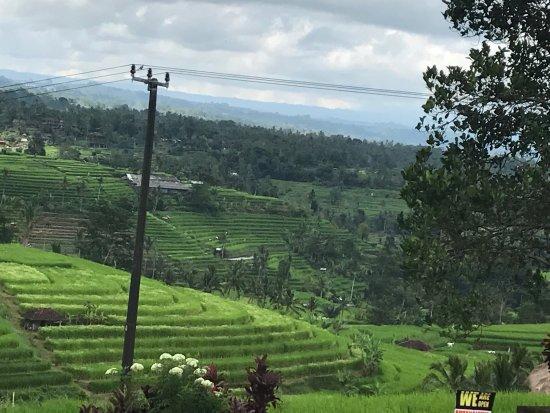 Jatiluwih Green Land: photo3.jpg