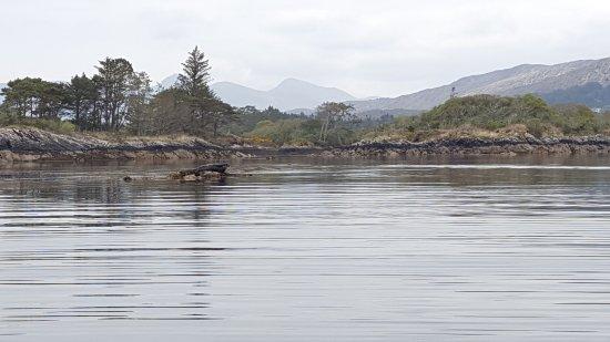 Sunfish Explorer - Motorised Kayaking Tours : A seal sunning on a rock