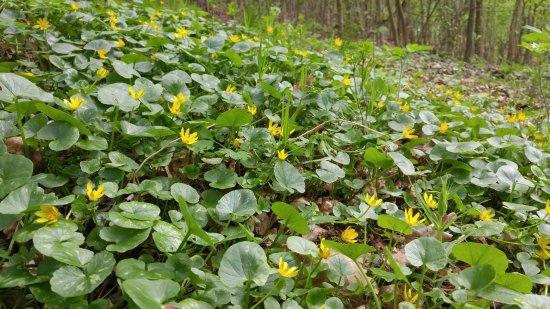 Znojmo, Çek Cumhuriyeti: Kwiecień w Parku.