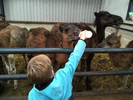 Camel Dairy Smits Image