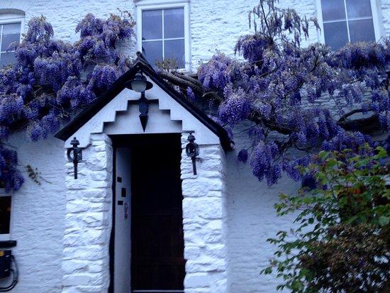 Abergavenny, UK: Wisteria around the door