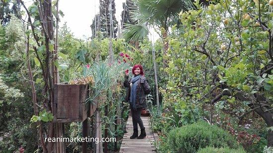 Este puente con la pared de plantas me enamor picture for Jardin botanico el ejido