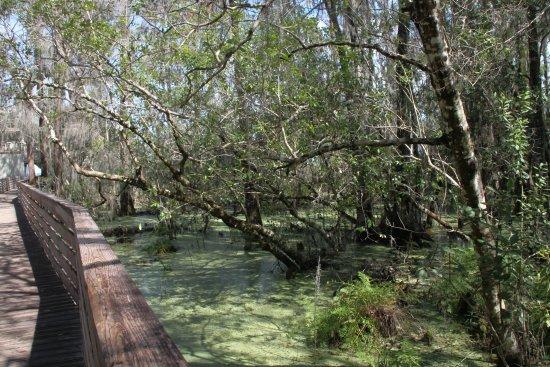 Lake Louisa State Park Camping Amp Cabins Updated 2018