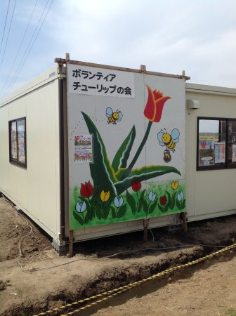 Sakura Tulip Festa: Tulip festa