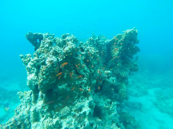 Reef picture of deep blue dive center aqaba tripadvisor - Deep blue dive centre ...