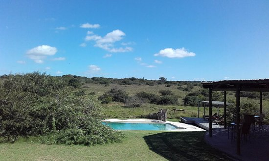 "Amakhala Game Reserve, แอฟริกาใต้: communal pool which is very ""natural"""