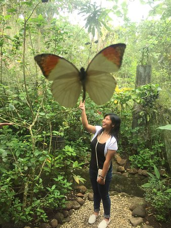 Bohol Land Tour - Habitat Butterfly Conservatory Center