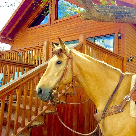 Moshav Ramot: Even your horses are welcome at our new Ranch Cabin