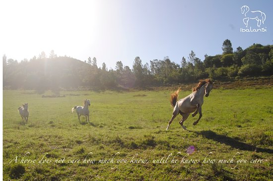 Riversdale, แอฟริกาใต้: Horses at Ibalansi enjoy over 70 hectares of free roaming
