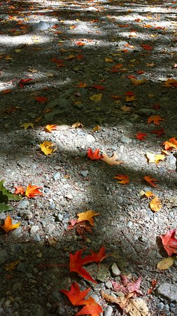 Sheffield, MA: Leaves scattered upon the paths.
