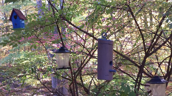 Sheffield, MA: A collection of birdhouses hang from the porch outside the common area.